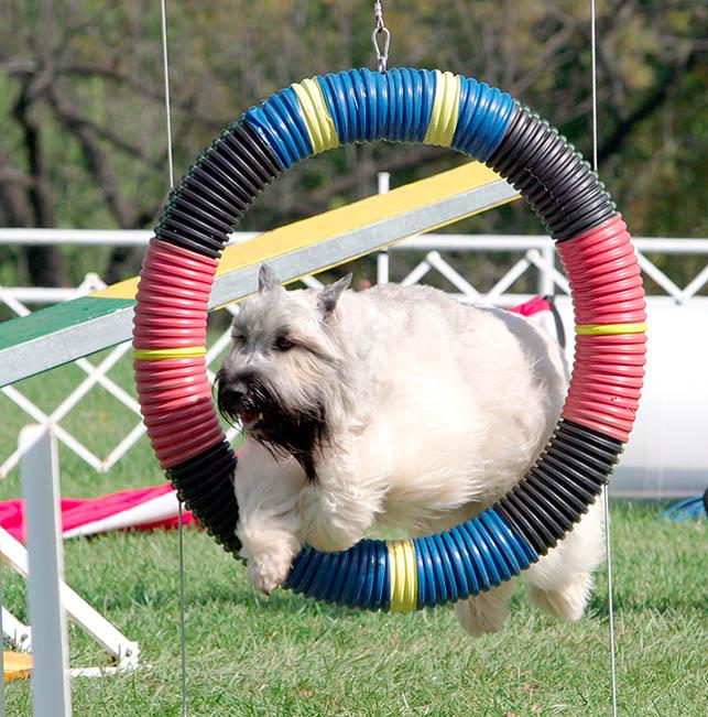 IMAGE: http://www.sitnprettyphoto.com/display/agility/6281w.jpg